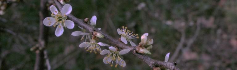 bloemen1