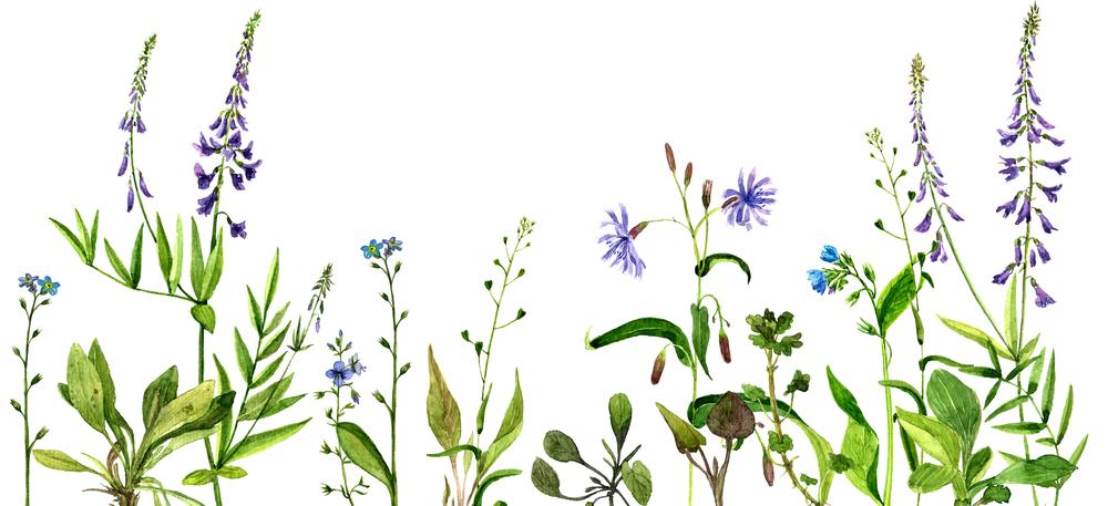 bloemen_achtergrond4